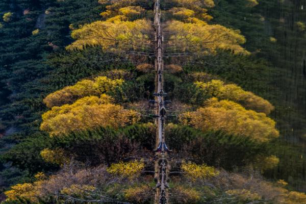 Sf Ana Tree